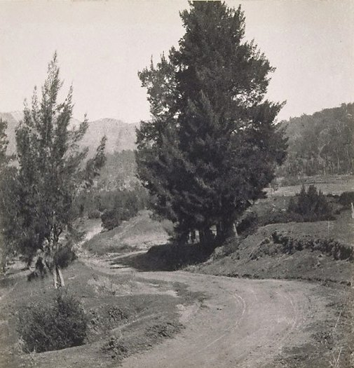An image of The winding road by Cecil Bostock